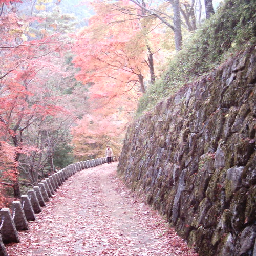 【写真】Red road [ Mt. Yoshino ]