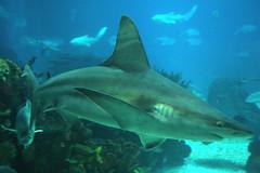 Shark (Fotografo Matrimonio Roma (Francesco Russotto)) Tags: canon shark francesco rufra russotto