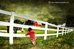 (mylaphotography) Tags: horses horse texture barn fence child goat goats stable horsestable mylaphotography