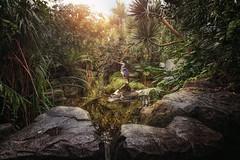 The Early Bird (Chrisnaton) Tags: nature bird masoalahalle pond tropical surreal heron sun earlybird stones