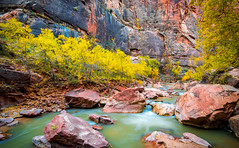 Zion National Park Autumn Colors & Winter Snow Fine Art Photography 45EPIC Dr. Elliot McGucken Fine Art Landscape and Nature Photography (45SURF Hero's Odyssey Mythology Landscapes & Godde) Tags: zion national park autumn colors fall foliage fine art photography 45epic dr elliot mcgucken landscape nature sony a7rii nikon d810 loved hiking narrows visiting subway