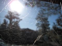 2009/365/135 A Web