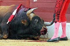 toro sangrando por la boca