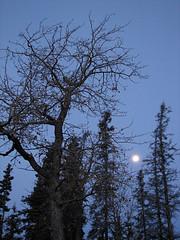 October Moon (BarbieW) Tags: nature alaska butte scenic palmer matsu knik blueribbonwinner freenature barbiesesbats esbatsgallery