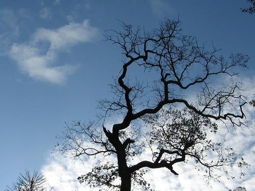 Nice trees and sky