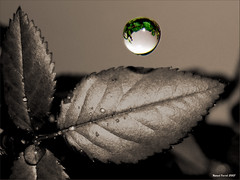 una gota de color (mfgraf.com) Tags: bw macro drops bn gotas clor cuteout desaturado instantfave abigfave anawesomeshot thinkthisisart