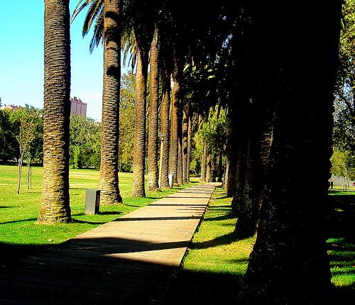 Caminho no parque