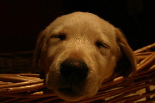 ...fallen asleep...