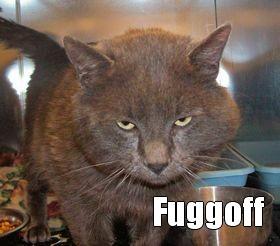 Fuggoff