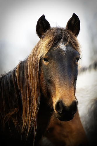 gathering mares 341