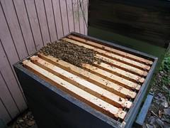 Beekeeping 2714