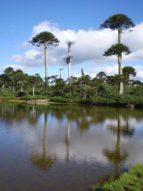 Sector Lagunillas, Parque Nacional Tolhuaca, Región de la Araucanía, Chile.