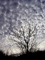 Puede ser (.Bambo.) Tags: sky tree clouds cielo nubes rbol silueta specnature abigfave puedeser anawesomeshot