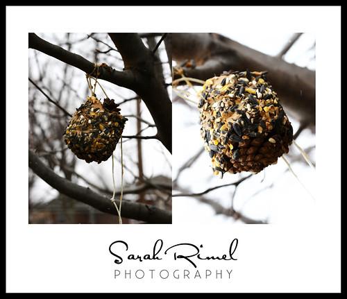 web bird 04