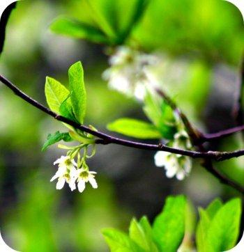 spring bloosom