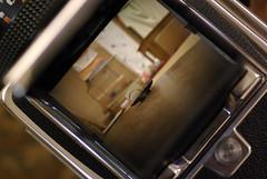 異次元へつながる窓 / Waist level finder