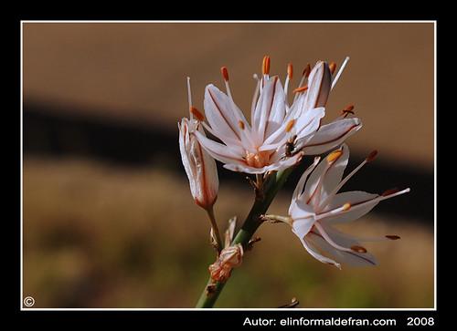 Insecto y flor