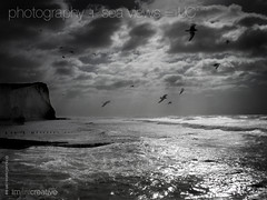 640x480  Stormy English Weather Seaford Beach Desktop Photo (imjustcreative) Tags: wallpaper seagulls beach landscape photography coast desktoppicture seaford desktoppictures desktopphoto roughsea stormyseas desktopphotos seafordhead