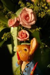 Easter gift!