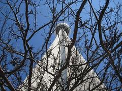 CN Tower (Leya :P) Tags: blue sky toronto canada tree tower cntower