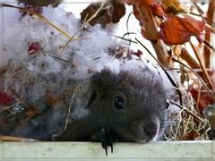 Squirrel (KWalk) Tags: squirrel bau homesweethome lager hhle eichhrnchen