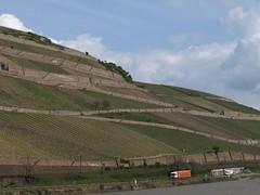 Rhine River Apr 08 099 (MurphMutt) Tags: castle germany rhineriver