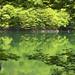 白神山地:shirakami
