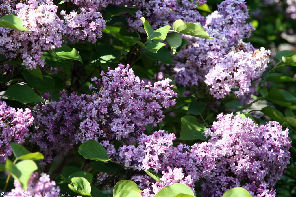 The Lilacs Are in Full Bloom, Billy