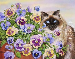 """""""Ragdoll and Pansies"""" AER70 by A E Ruffing Ragdoll Cat"""