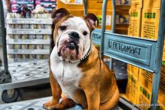 Pet in a pet store! (kestat) Tags: dog nikon tokina 1224mm d90