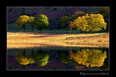 Blea Tarn. (numanoid69) Tags: uk trees england lake water reflections nationalpark lakedistrict cumbria tarn reflexions langdale bleatarn fujis5pro prideofengland