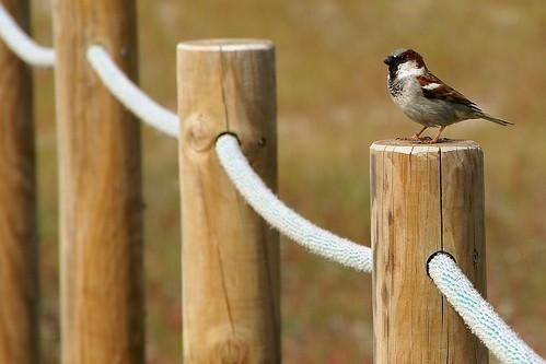 olá passarito - hello little bird! by @uroraboreal