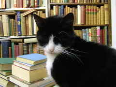 Boris in the Bookshop 4 (eagle stirreth) Tags: cats cat glasgow books boris bookshop voltaire rousseau