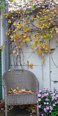 Very fall (La Mars) Tags: fall leaves garden chair atumn
