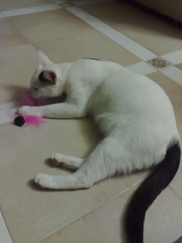Ink gets acquainted with his new toy