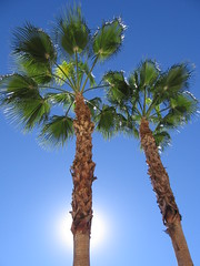 California (jamacdonald) Tags: california sun palmtrees uberalles