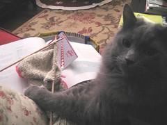 fergus knits a baby bolero