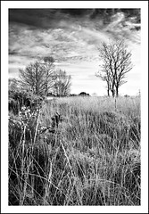 High Plains (Andy Perry) Tags: wood uk trees winter light sky blackandwhite bw black tree nature grass clouds dark landscape countryside moody pentax cloudscape heathland aficionados supershot specnature k10d pentaxk10d ccmponblack diamondclassphotographer bestnaturetnc07