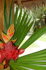 Tropical display. (Blackstallionhills.com) Tags: flowers costa black beauty design creative rica hills tropical catalog stallion