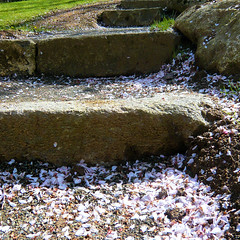 Parc de Maulévrier - Escaliers et pétales de cerisiers