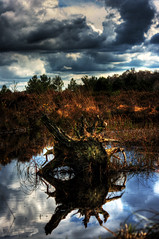 irish bog wood (Irishphotographer) Tags: ireland sunset red lake storm art colors clouds river landscape yahoo google interesting kim pentax colorfull eire shore msn 2008 reboot sureal hdr outofthisworld ask eyecatcher jeeves irishart day183 day190 day191 kinkade catart beautifulireland hdrunlimited exploretop20 day2day anawesomeshot anawsomeshot besthdr july2008 k20d imagesofireland picturesofireland pentaxk20d shatwell fridayspic kimshatwell irishcalender09 calendarofireland breathtakingphotosofnature beautifulirelandcalander wwwdoublevisionimageswebscom