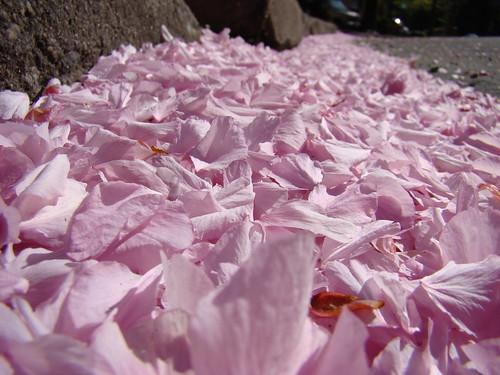 a blanket of petals