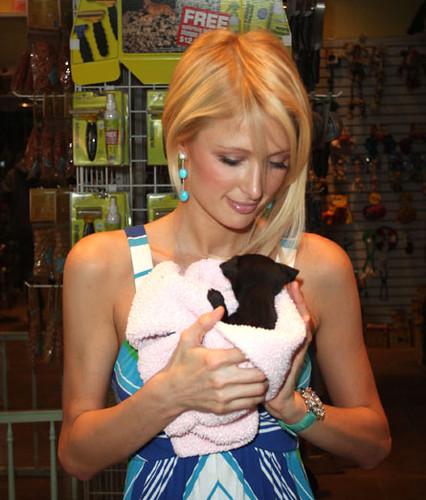 Paris Hilton at a pet store in LA