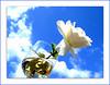 ... a day of wine and roses! (juntos ( MOSTLY OFF)) Tags: life roses me sunshine day wine toast explore enjoy inspire rare soe atoz themoulinrouge fpc excellenceinfloralphotography imagequality flickrsbest 25faves creativephotos mywinners abigfave artlibre silentlife diamondheart platinumphoto anawesomeshot blueribbonaward goldenphotographer diamondclassphotographer flickrdiamondaward excellentphotographer theunforgettablepictures eperke brillianteyejewel overtheexcellence goldsealofquality betterthangood everydayissunday goldstaraward hearthsawards exquisiteimage imaginepoetry imagesonblue flickrsroseaward beautifullsecrets oracleofexcellence vision100