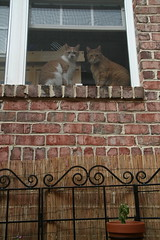 onlookers