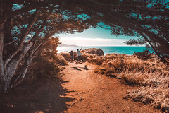 Path. California, USA (Marji Lang Photography) Tags: america american california californiacoast californiahighway1 californiastatepark californian marjilang nature northamerica outdoors pacificcoast pacificocean sea usa atmosphere beautifulcolors bluesky children colorful colors composition contrast documentary enjoy enlighted environment golden goldenhues goldenlight goldentones happy holiday holidaydestination horizontal hues journey jump jumping kids landscape life light lightandshadow mood moody natural naturelovers ocean path people peopleinnature pinetrees play roadtrip run scenic scenicview shadows splittones tones trail trailpath travel traveldestination travelphotography trees trekking twokids twopersons vegetation warm warmth statepark