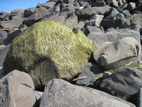 & Dry Creepy Sea Grass Muppet Monster
