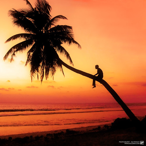 sunset palm tree solitude