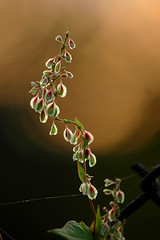 Searching for light (Rafal Bergman) Tags: light plant flower macro closeup fence wire naturesfinest aplusphoto diamondclassphotographer