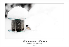 D i n n e r T i m e (Imapix) Tags: winter snow bird nature animal photo photographie birdfeeder chickadee blackcappedchickadee imapix gaetanbourque imapixphotography gatanbourquephotography